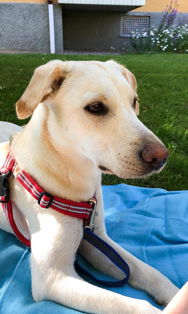 Hänga på en filt ute i trädgården - Amoll.net