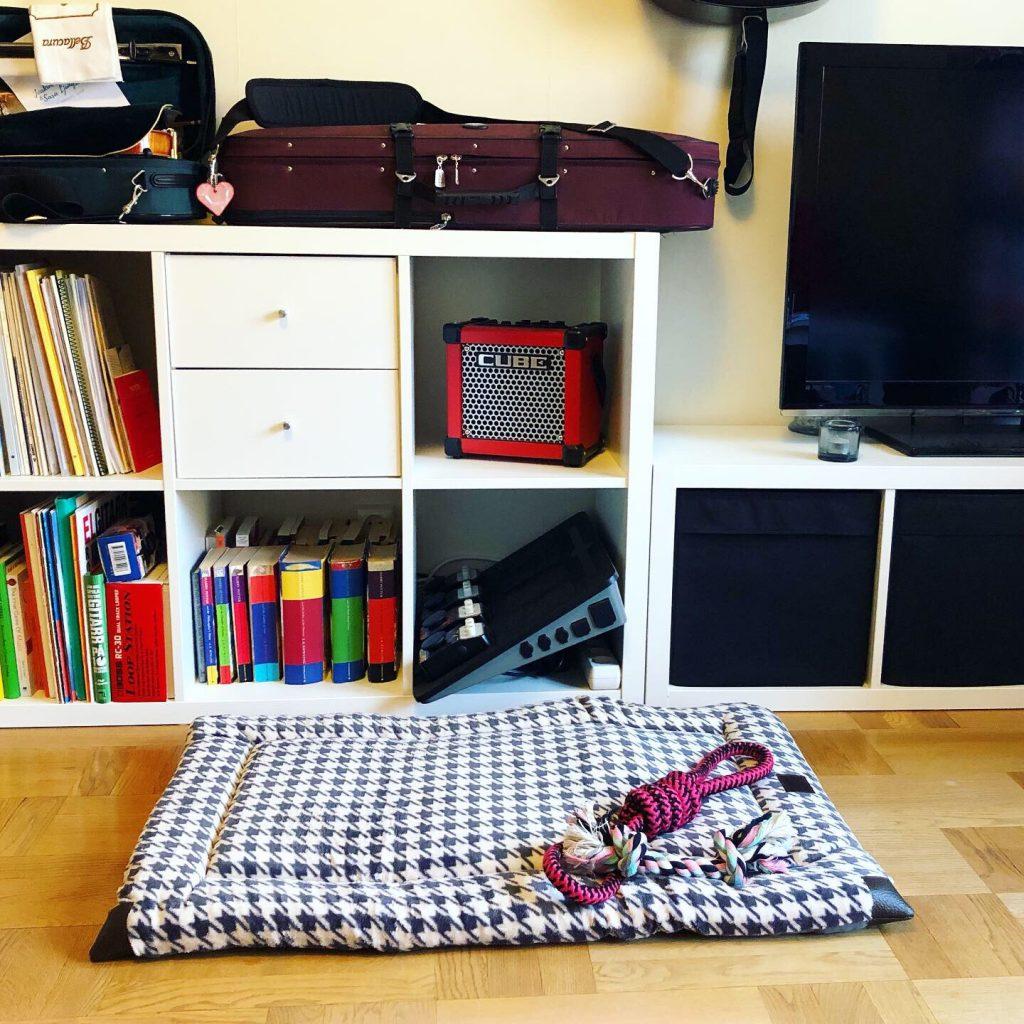 Hundbädd och leksaker i vardagsrummet - Amoll.net